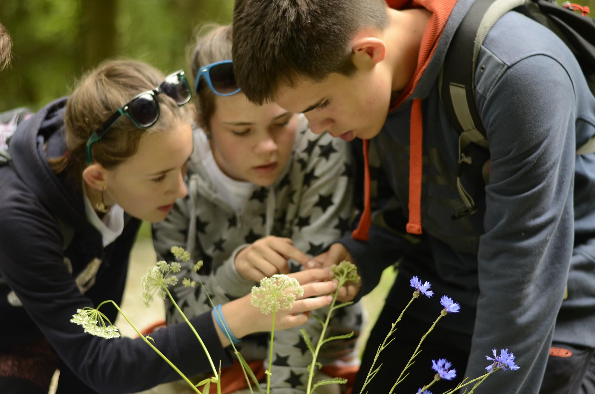 Určování rostlin na soutěži Zlatý list